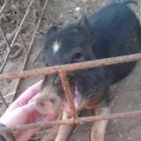 Индия, Морджим, такой же счастливый и ласковый Пумба)))