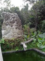 лес обезьян, пруд