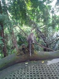 лес обезьян2
