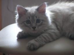 кошка Маруська (Марья)