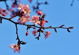 цветы на небе