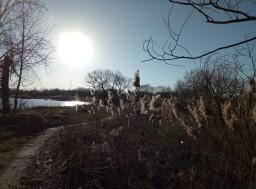 Весна и солнце